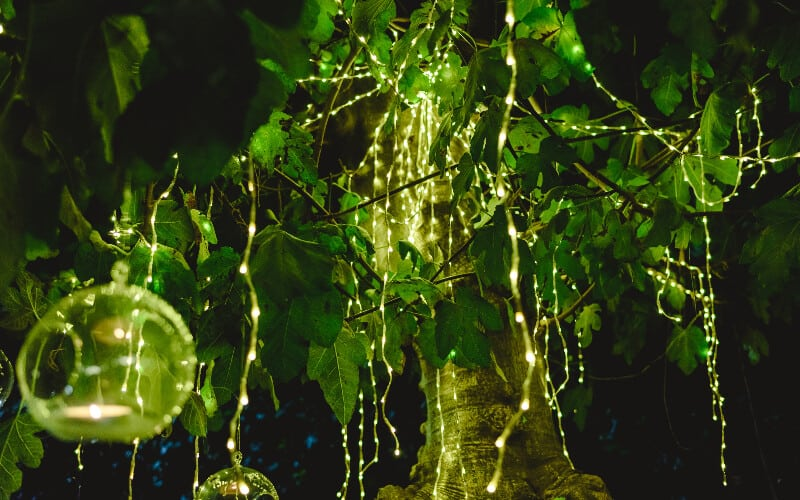 A group of solar-powered string lights hung up from a tree at night.