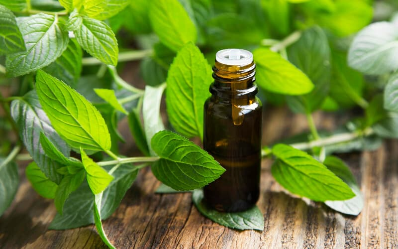 Peppermint essential oil surrounded by mint leaves.
