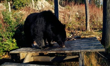 How to Keep Animals Away from Your Campsite: Easy Tips & Tricks