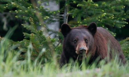 How to Avoid and Survive a Bear Attack