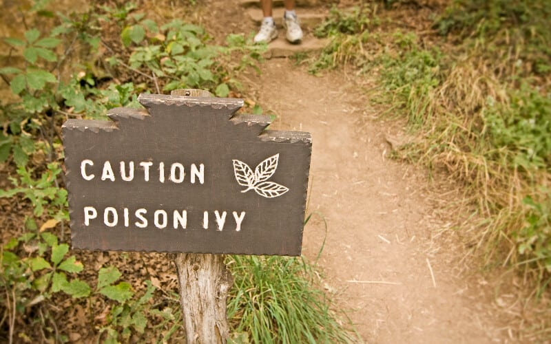 A warning sign alongside a path lined with poison ivy.